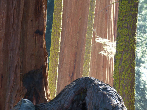 Sequoia Park USA 2012